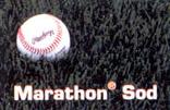 Marathon Sod