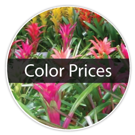 color-prices