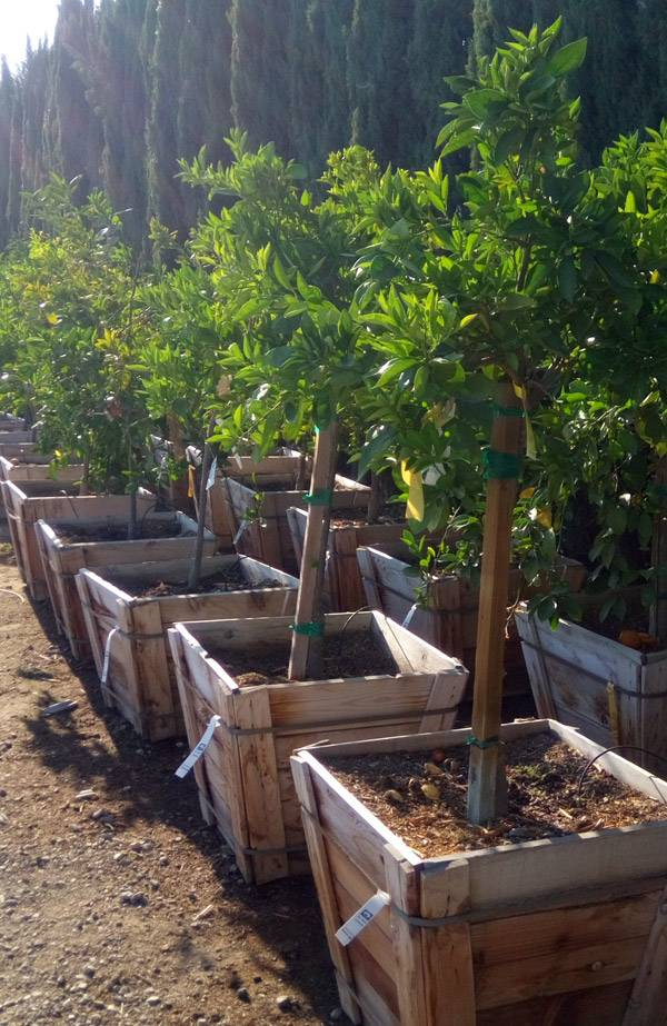 Fruit Trees