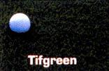 tifgreen